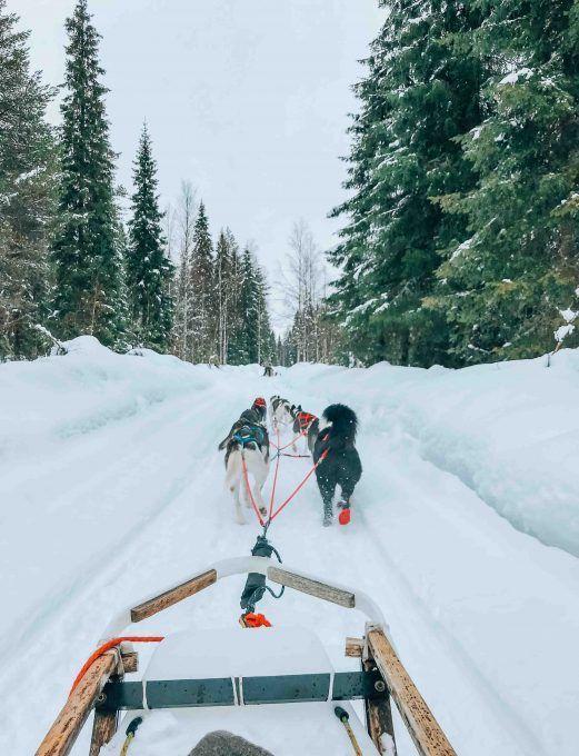 Discover Rovaniemi: Husky Sledding and meeting Santa