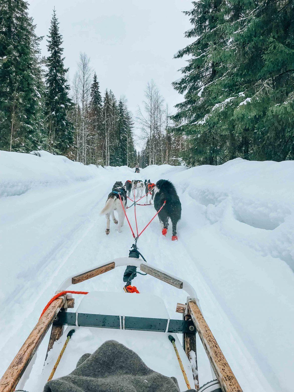 Husky Sled Lapland