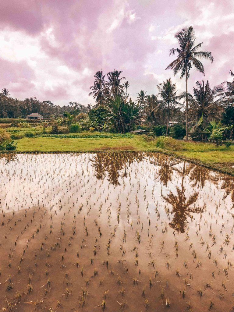 Desa Visesa Ubud Hoteles Boutique con encanto en Bali