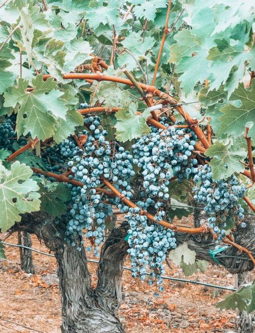 Disfruta de una cata de vinos en el Valle de Napa, California